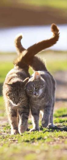 Katzen Chicopee Trockenfutter