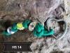 Halsbandbaumler grün