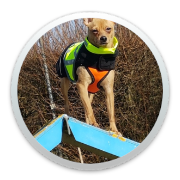 Fun Agility Textbild icon rund